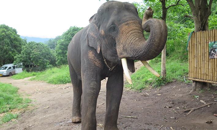 Nuestro gran amigo en Woody Elephant Training