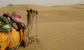 camello_desierto_thar